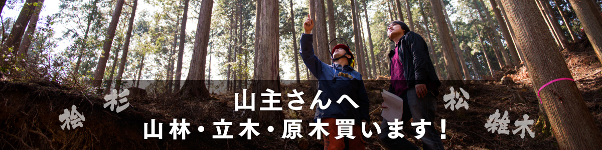 山主さんへ 山林・立木・原木買います!